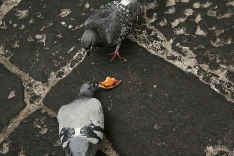 High angle view of pigeons eating food on cobbled street