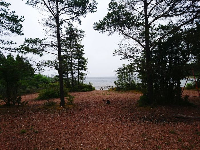 Documenting Swedich East-coast Landscapes Gästrikland Archipilago Baltic Sea Shoreline Landscape_Collection Landscape_photography Landscape Sea Gävlebukten Check This Out Nature_collection Nature Nature Photography Trees Pine EyeEm Best Shots Eye4photography  EyeEm Gallery Enjoying Life Outdoors Natural Beauty Nature's Diversities Landscapes Landscape Photography The Great Outdoors - 2017 EyeEm Awards