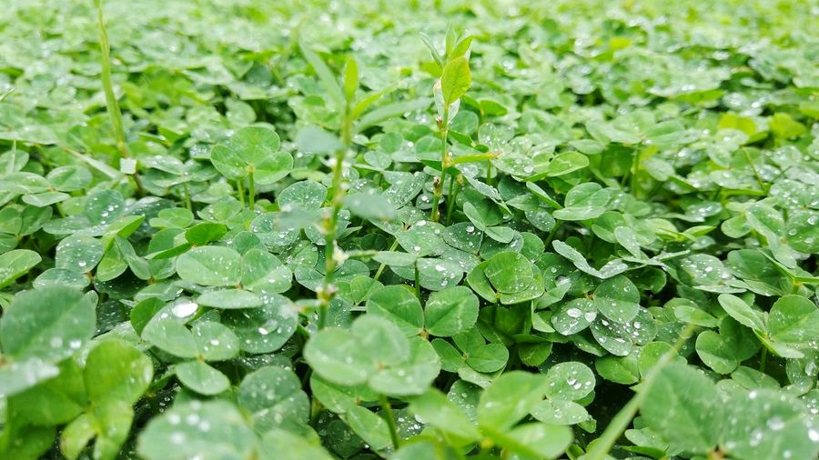 Water Leaf Backgrounds Full Frame Drop Close-up Green Color Plant