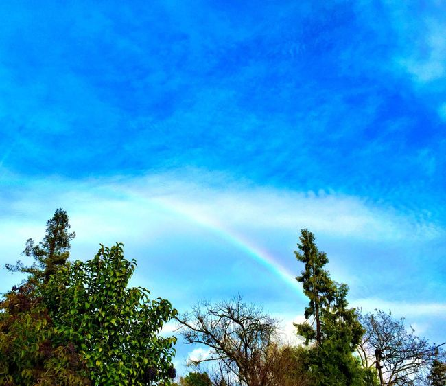 """""""Half Bow"""" Caught half a rainbow on an afternoon walk on this first day of Winter 2015-2016. Rainbow Rainbows Blue Sky Firstdayofwinter Winter Afternoonwalk"""