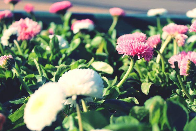 Blumen Flower Nature Beauty In Nature No People Freshness Blooming Green Color Day Outdoors Flower Head Fotography Flowerporn Blumenpracht🌺🍃 Blumen Blumenfotografie Flowers, Nature And Beauty Flower Power Flowerphotography
