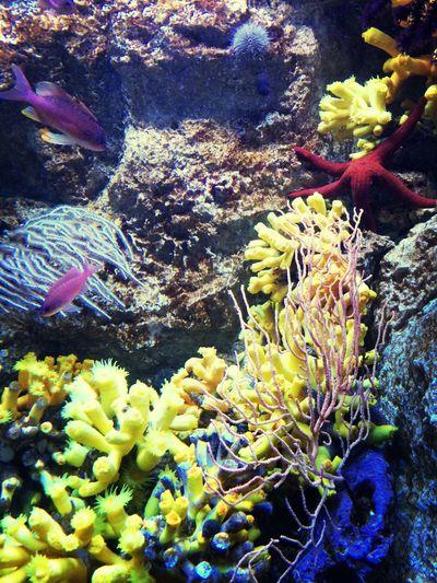 Underwater World Aquarium ?