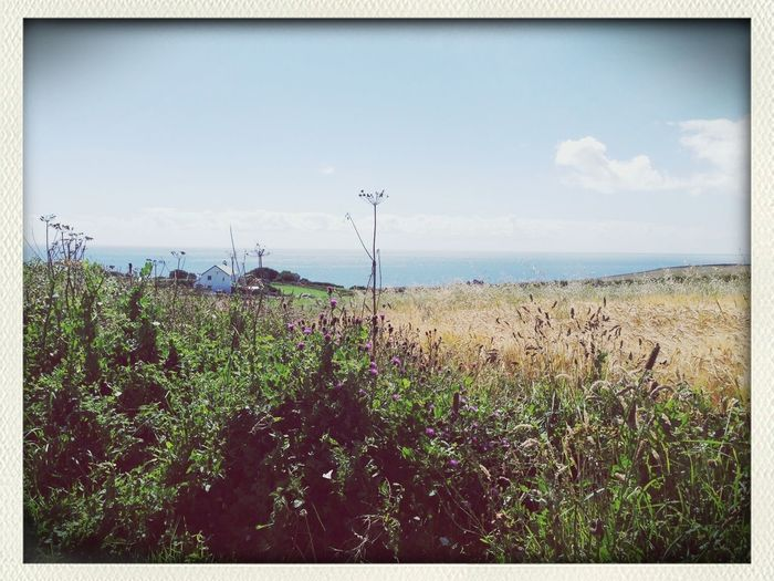 Landscape_Collection Clara Filter 25 Days Of Summer