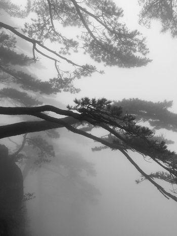 安徽黄山。雾。