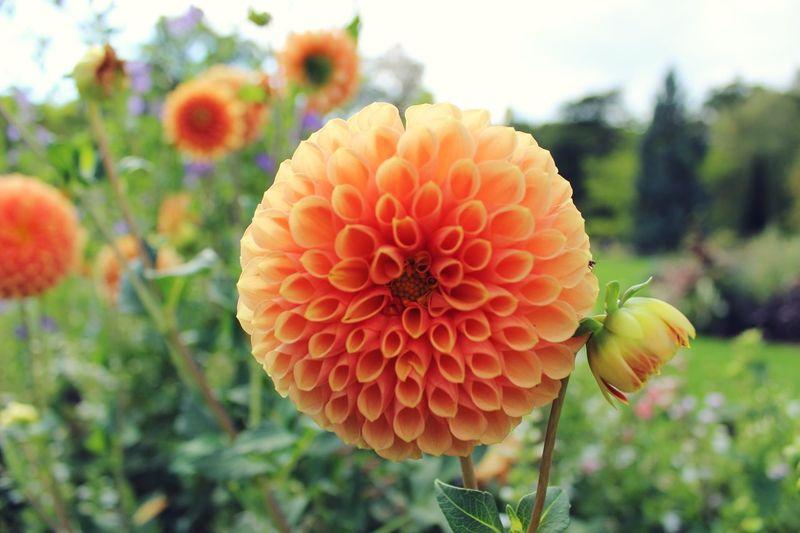 Flowers Orléans