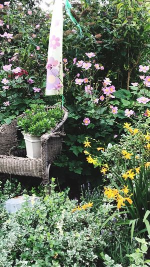 My wild garden ❤️ Plant Growth Nature Day Outdoors Potted Plant Front Or Back Yard Beauty In Nature No People Green Color Leaf Fragility Freshness Tree Blooming Flower Head Petunia Close-up