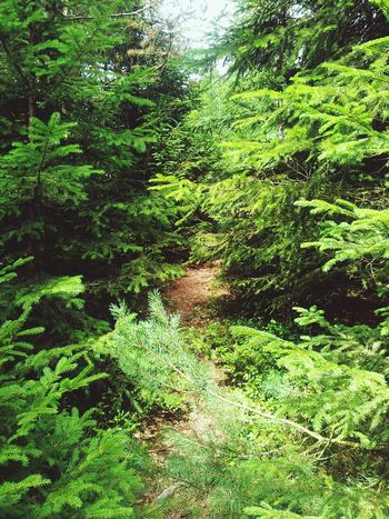 Wunderschönes Wental♡ EyeEm Nature Lover Walking Nature Wald