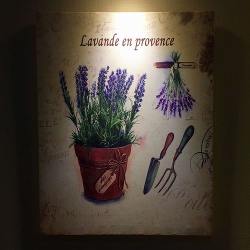 Plants Text Western Script Plant Indoors  Communication Potted Plant No People Nature