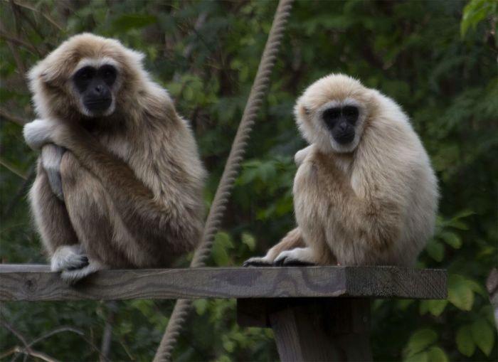 Primate Two