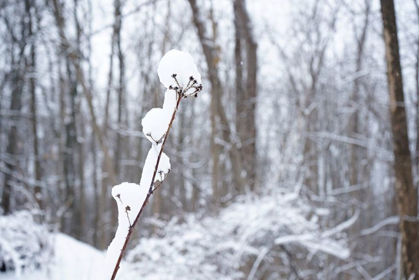 Winter Snow Cold Temperature White Color Nature Beauty In Nature Ice Outdoors Day People Adult Pool Cue