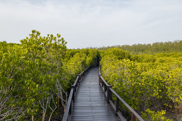 Boardwalk amidst plants on land against sky