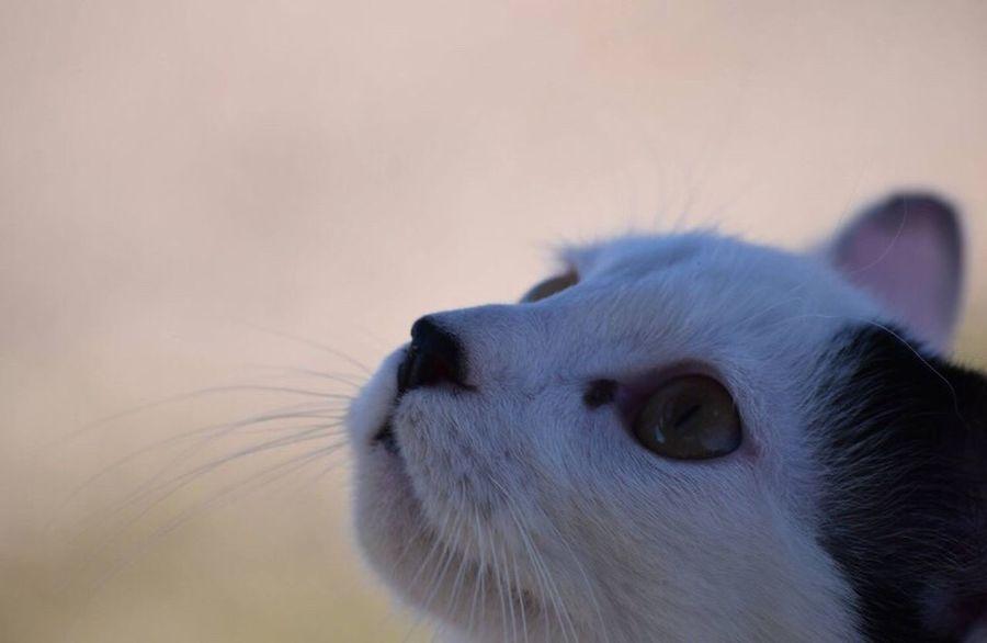 🔍👁🐱 Eyemphotography Showcase: February EyeEm Best Shots EyeEmAnimalLover Kitty Cat Close-up Animals