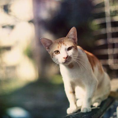 Cat Phoewa Igersburmeseigers Igersmyanmar instaphotography xperiaphotography Z1 photooftheday photooftheweek yangon myanmar burma