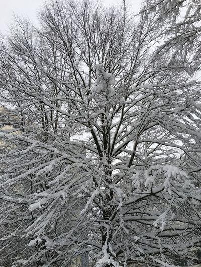 Tree Full Frame