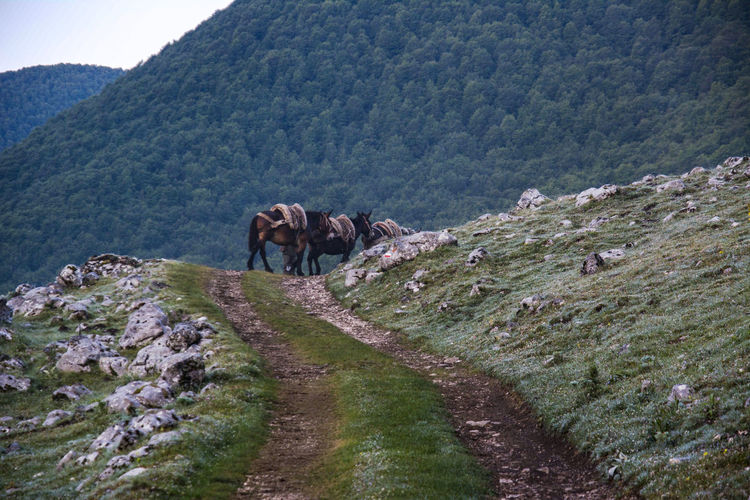 View of a horse on mountain