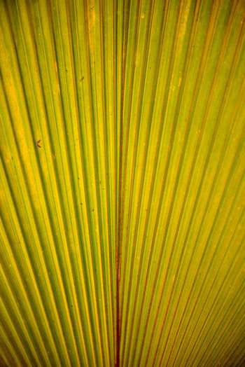EyeEm Best Shots Eye4photography  Getting Inspired Full Frame Backgrounds Pattern Natural Pattern No People Palm Tree Palm Leaf Close-up Leaf Growth Beauty In Nature Textured  Plant Part Frond Plant Nature Tropical Climate Green Color Abstract Abstract Backgrounds Green