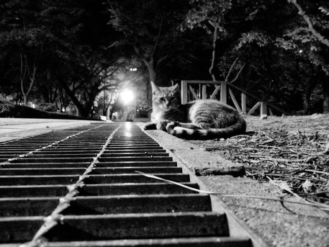 No People Seokchon Lake Cats Nature Feralcat Night Cat Night Animal Catlover Black Color Relaxation