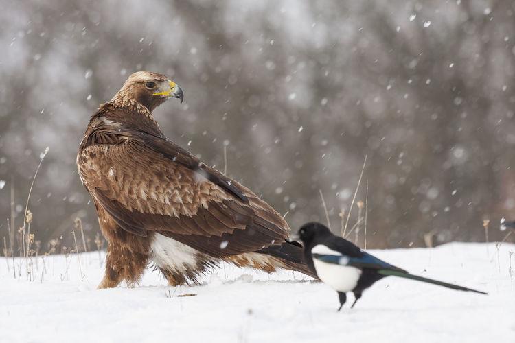 Bird on snowy field during winter