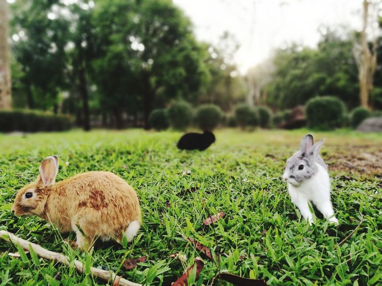 Rabbit ❤️ Animals