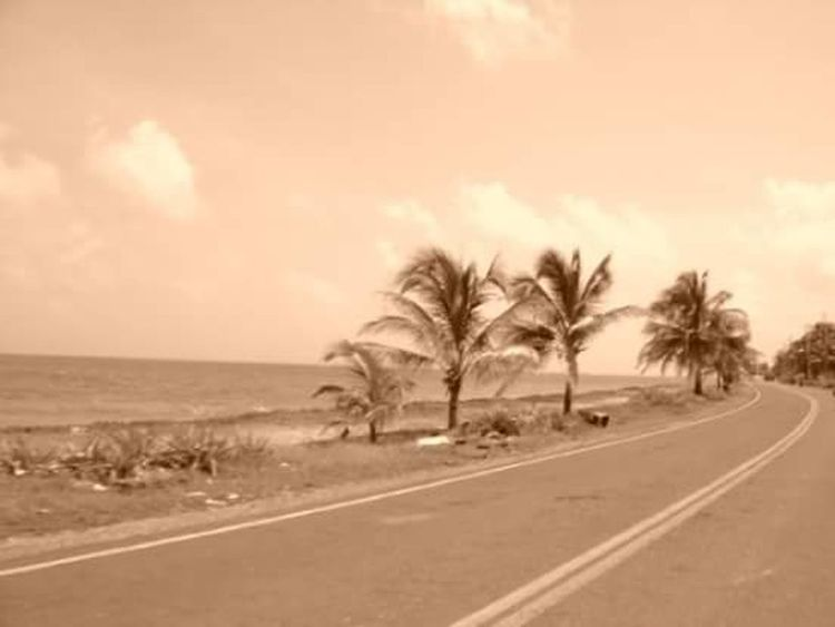 LA Isla Bonita Road Palm Tree Nature Landscape Tranquil Scene Tree No People Island BeautifulIsland Natural Disaster Sky Day Outdoors