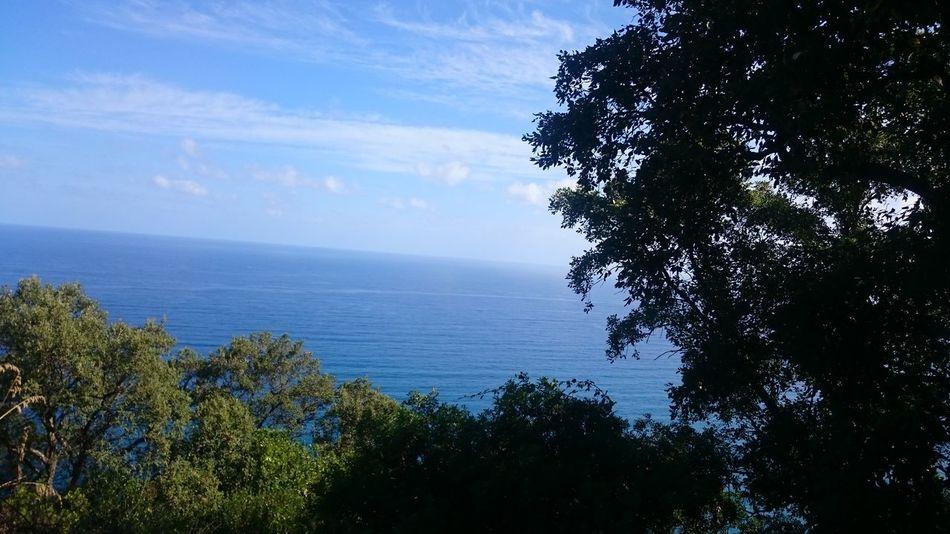 Bleu Sea And Sky Bleu Sea Sea And Trees Bleu And Green Serenity Nature_collection Serenity Calm View Jijel Algeria.