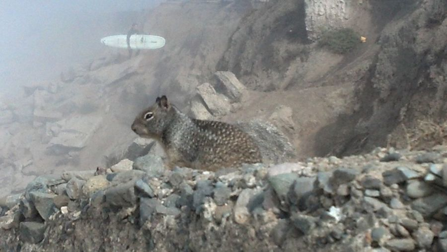Cliff Squirrel