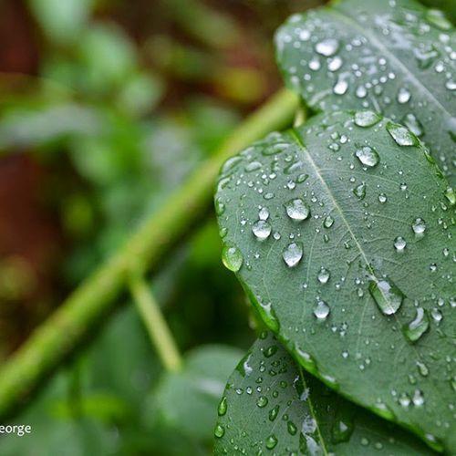 After the rain Magicpict Colorsoftime OSHOMoment Instagram Drops Monsoon Rain