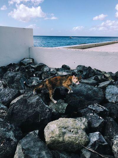 Travel Traveling Ocean Animals Cat Rock Beautiful