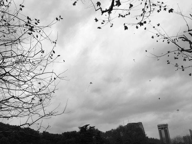 坐在公园长椅上,眼泪就这样流下来 在路边看见橱窗里变成了2017,突然不能接受 马上就过去了,也许今年太重要了,上海于我,空空荡荡