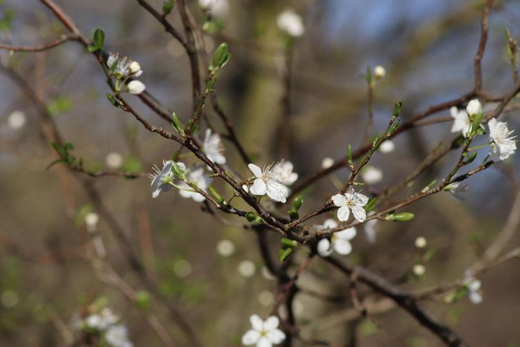 Springtime No