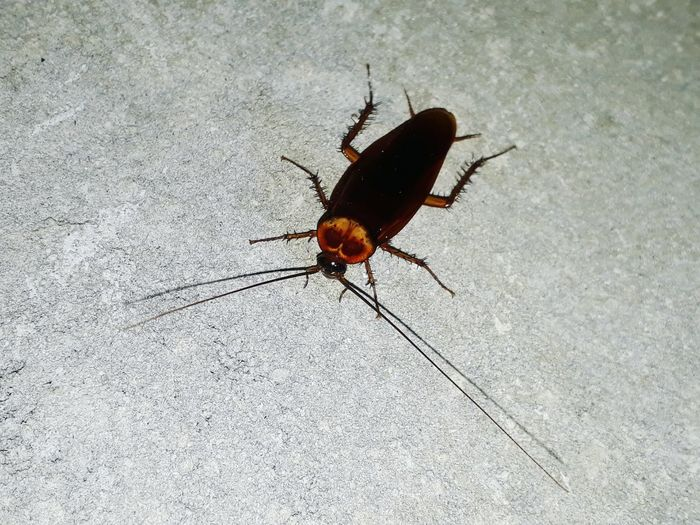 Insect Animal Themes One Animal Animals In The Wild Animal Wildlife No People Day Full Length Outdoors Close-up Nature