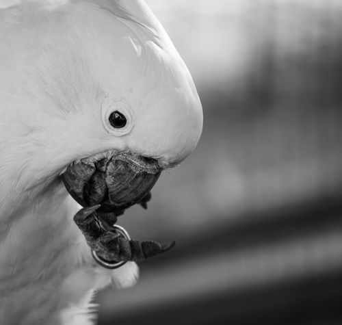 Close up shot of a parrot at the zoo First Eyeem Photo Birds Animals Parrots Parrot Lover Blackandwhite Close-up