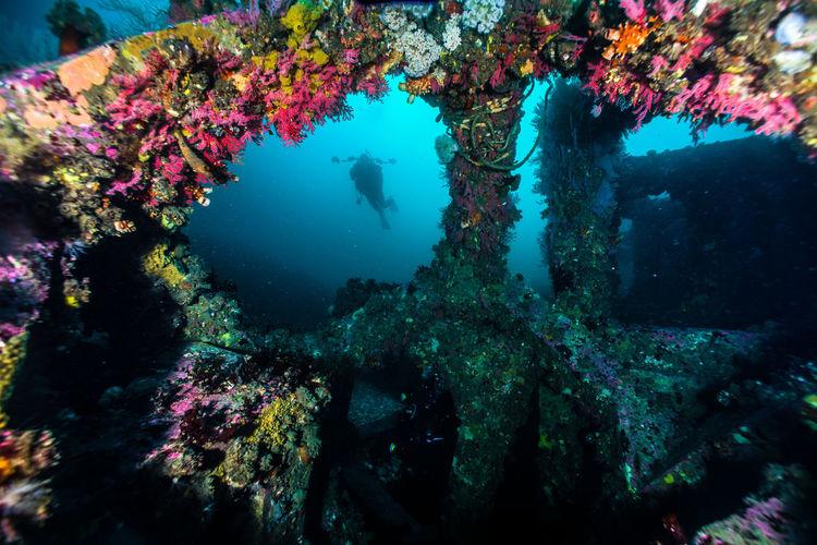 Multi Colored Corals Grew On Concrete Blocks Underwater