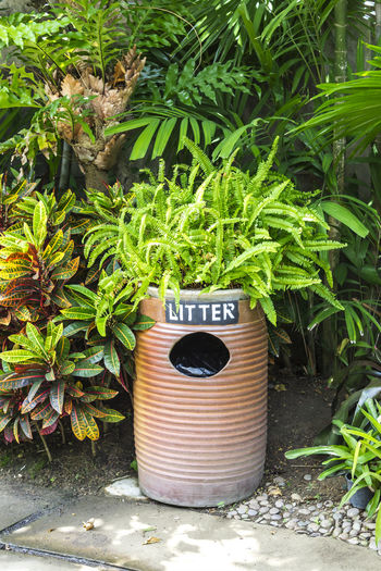 Earthenware litter bin with green plant Background Bin Cleanliness Compost Concept Conservation Container Design Discard Disposal Dump Dustbin Earthware Ecology Environment Garbage Junk Organic Plant Recycle Rubbish Throw Trash Wase