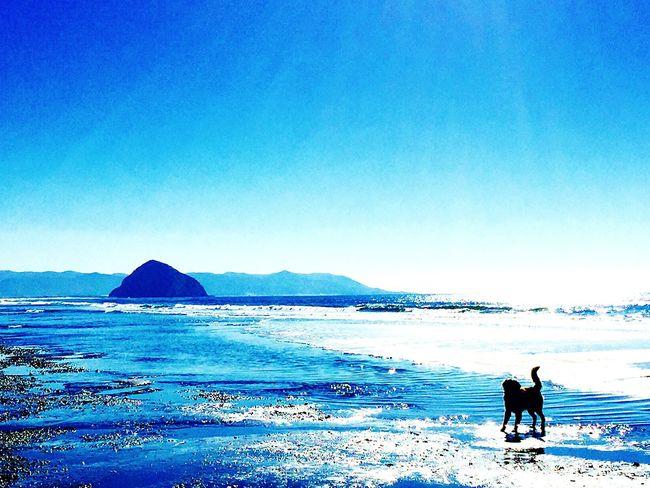Beachphotography Sunshine Enjoying The Sun Dog Love Ocean EyeEm Best Shots - Landscape Morro Bay Landscape Photography Doggies Blue Sky