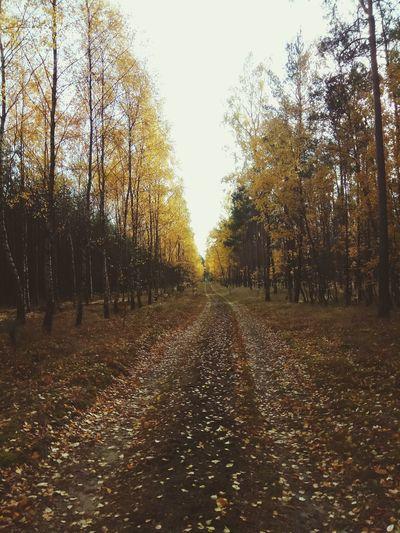 Goldpolishautumn Autumn Forest Tree Autumn Sky