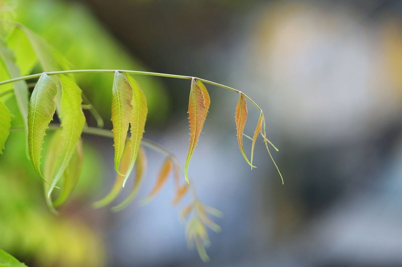 New Beginnings Fresh Leaves Neem Tree Lazy Evening First Eyeem Photo