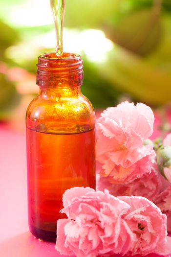 Close-up of pink flower in glass bottle