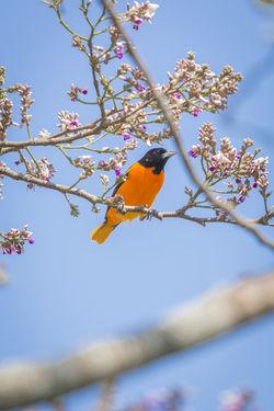 ave Animal Animal Themes Animal Wildlife Bird No People One Animal Sky Tree