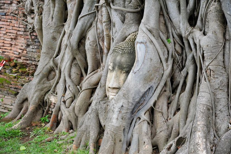 Nature_collection Sculpture No People Representation Human Representation Art And Craft Statue Tree Day Religion Plant History Spirituality Travel Destinations Architecture Belief
