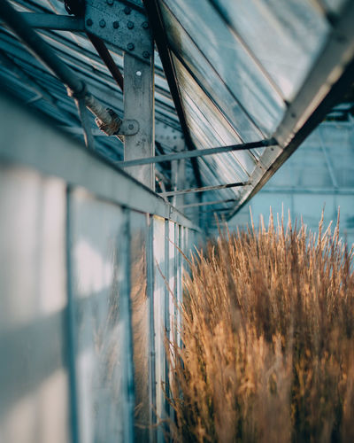 Architecture Building Exterior Built Structure Close-up Day Nature No People Outdoors Plant Selective Focus