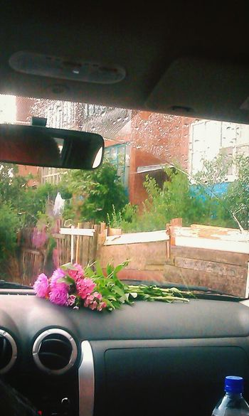 Flowers гром дождь гроза