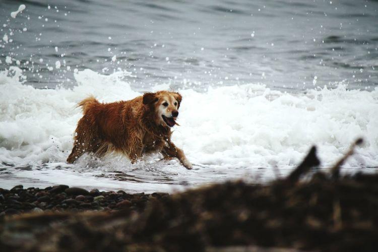 Dog running on wet shore