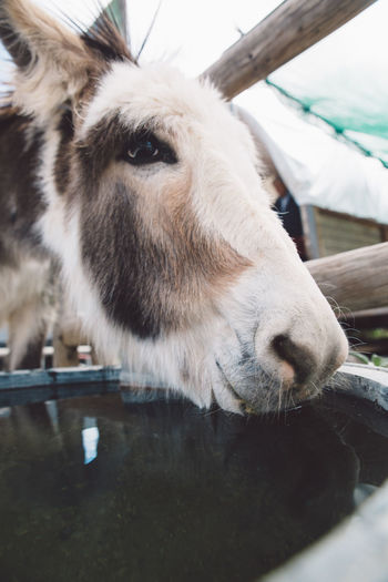 Close-Up Of Donkey Over Trough Outdoors