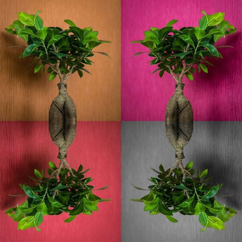 Mirror Image Of Plants On Colorful Table