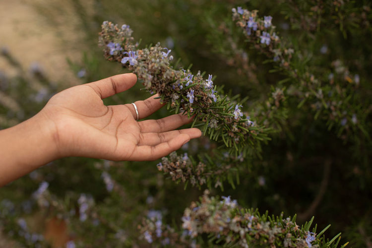 Close-up of hand holding small purple flowering plant