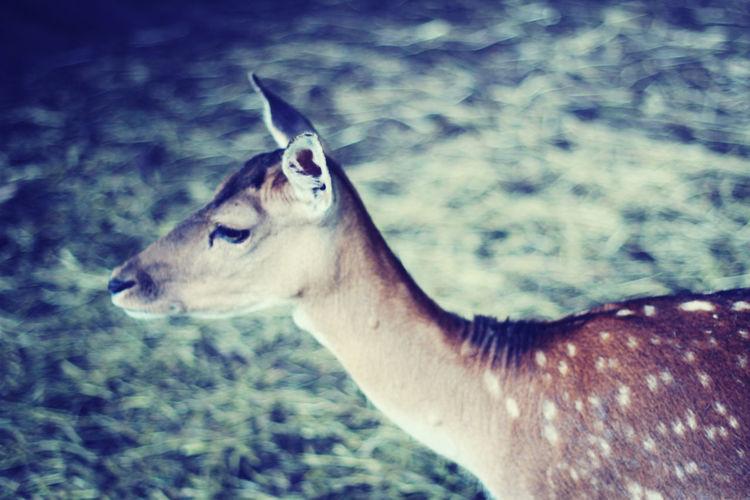 Watching Deer