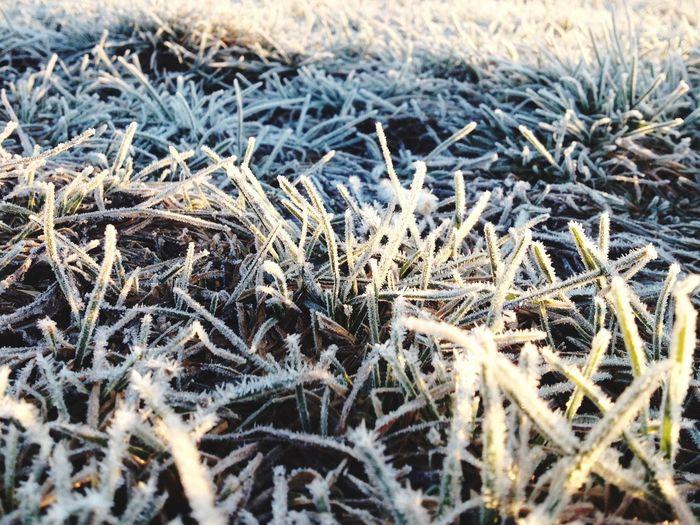 First Eyeem Photo Grass Snow ❄