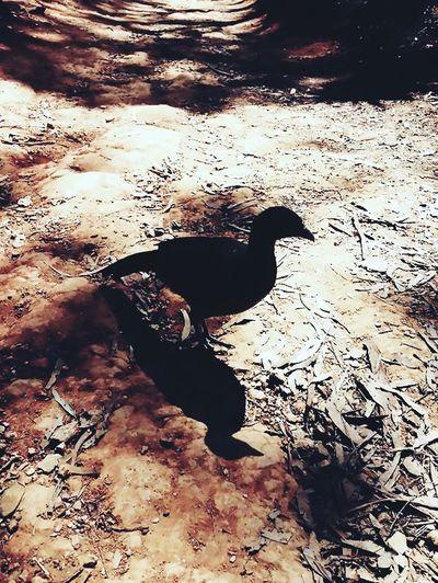 Shadow Animal