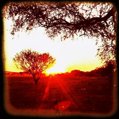Beautiful Sunsets Beauty In Nature Day Eyemphotograpgy Growth Landscape Nature No People Orange Color Outdoors Plant Radient Red Scenics Silhouette Sky Sun Beams Sun Rays Sunset Tranquil Scene Tree